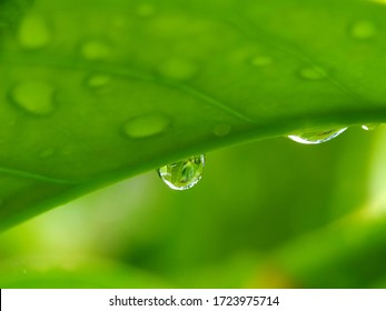 water droplets on green leaves after rain