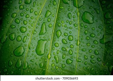 water droplets on leaf / leave background