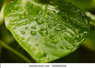 Water droplets on leaf. Macro shot with small depth of field.