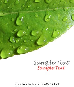 Water droplets on leaf with space for text