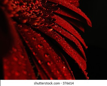 water droplets on red petals
