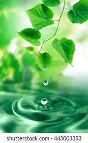 Water drops falling from freshness green leaves. Nature background