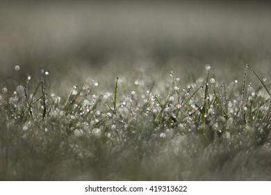 Water drops in the grass