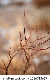 water drops from melted snow cling to bare winter branches in California desert nature background
