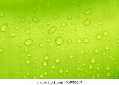 Water drops on banana leaf surface