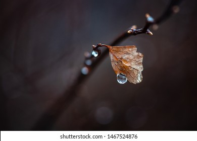 Water drops on branch autumn weather cold rain nature macro photography cloud