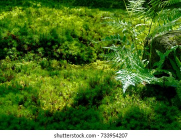 Water drops on fresh green grass background. Green grass background.