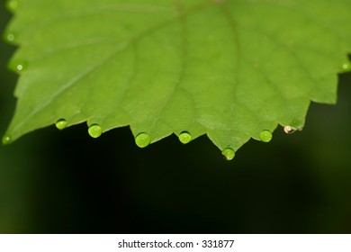water drops on grape leaf