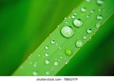 Water drops on the grass