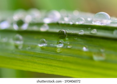 water drops on the green grass-nature background