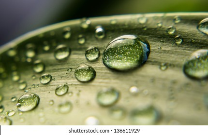 Water drops on the green leaf closeup