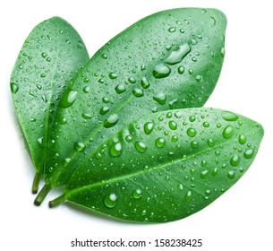 Water drops on a green leaf background.