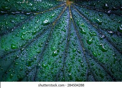 water drops on green leaf - macro shoot