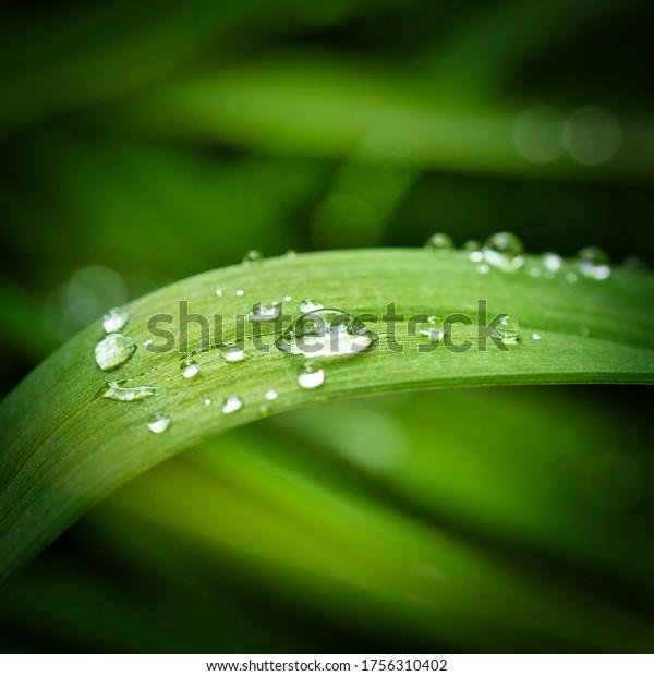 water-drops-on-green-leaf-600w-175631040