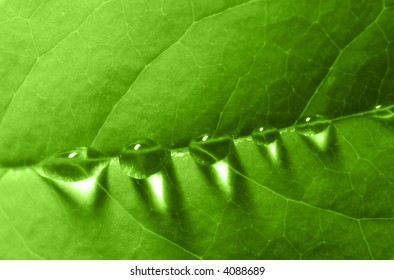 water drops on a leaf (shallow DOF)