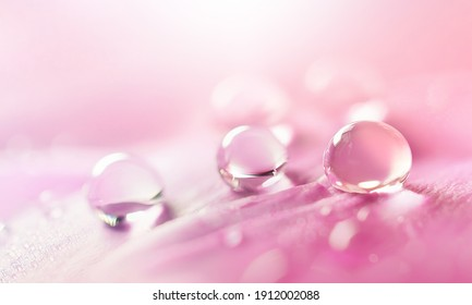 Water drops on pink flower petal close-up macro. Gentle artistic image of purity and beauty of nature.