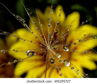 Water drops on the plant
