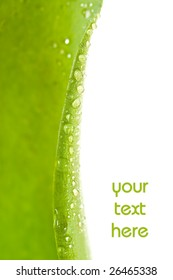 Water drops on plant leaf with lot of copy space.