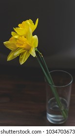 Water drops on single Daffodil in water glass; atop dark wood surface