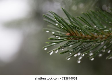 water drops on a tree