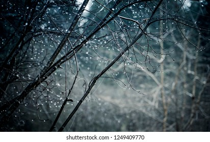 Water drops on trees forming bokeh in a mistly forest in winter.