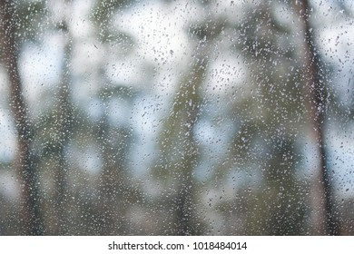 Water drops on window. View through the window to wood, forest, garden. Background.