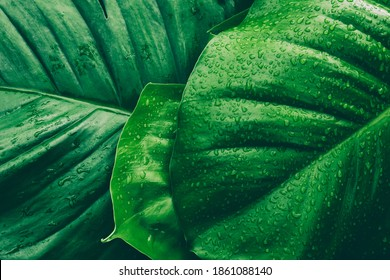 water drops splashing on green leaf, purity nature background - Shutterstock ID 1861088140