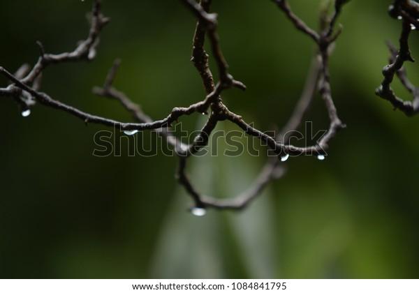 Water drops tree
