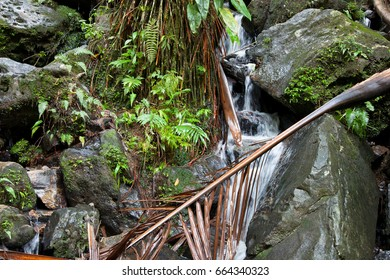 Water fall with palm branch in the foreground