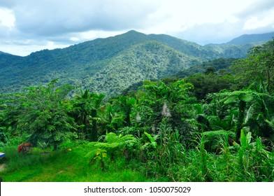 Water falls El Yunque rain forest in Puerto Rico