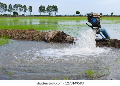 Water flow from large pump tube in rice field.