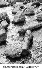 Water flowing among tree trunks and stones - black and white.