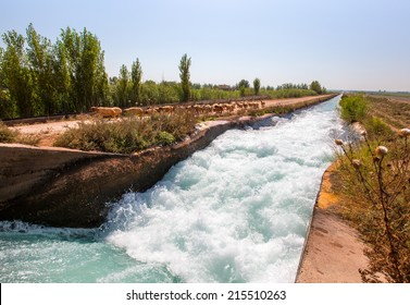 water flowing in an irrigation canal with sheep herd
