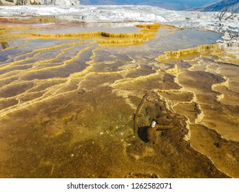 Water flowing over the travertine terraces creates an otherworldly landscape in the Mammoth Hot Springs area of Yellowstone NP in  Wyoming. White powdery rock is seen in the background.