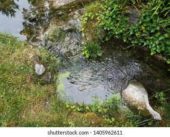 water flowing in stream or creek with green plants