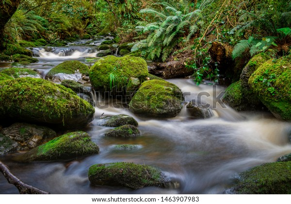 Water flowing through creek in forest setting, Tapanui, New Zealand.