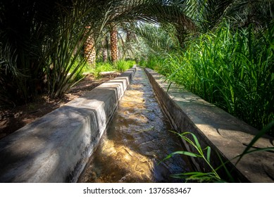 Water flowing in a traditional water channel named falaj surrounded with various shrubs, grasses and palms, taken on a sunny morning in Al Qattara Oasis, Al Ain, UAE