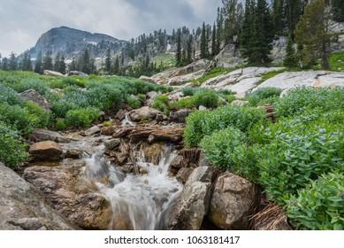Water Flows Through Spring Flowers in Grand Teton National Park