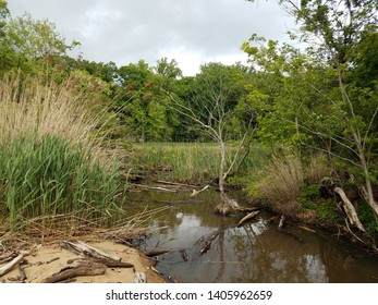 water and grasses and trees in wetland or swamp