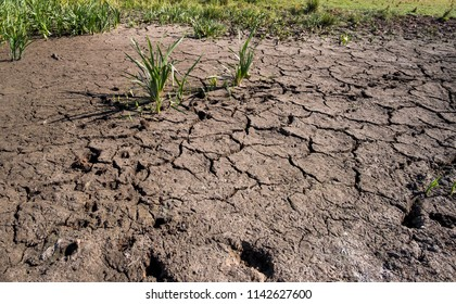 A water hole dried up during the UK summer heatwave 2018