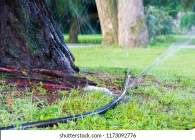 Water hose with a big leak that is used for hydrating the trees on hot days during summer of a park in the city. The leaks reduce efficency and effectiveness and rise the water consumption