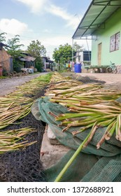 Water hyacinth stalks used in handicraft drying on fishing nets in rural village along Mekong River Delta in Vietnam.