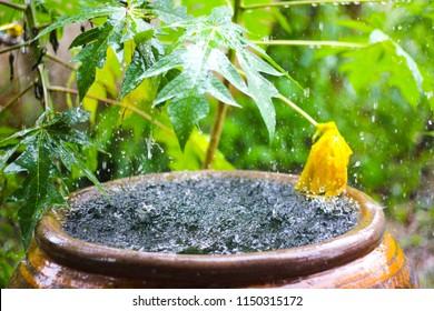 Water jar in the rainday