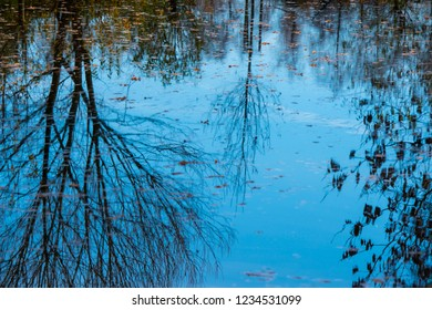 water level with tree and autumnal leaves mirorring