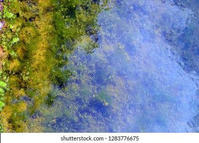water like mirrow  in green, yellow, blue colors located in the Botanical garden.
