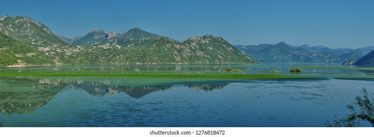 Water lilies on the clear water of Skadar Lake in Montenegro and Albania. In the background are small islands. It is the largest lake of the Black Mountain and the largest bird reserve in Europe.