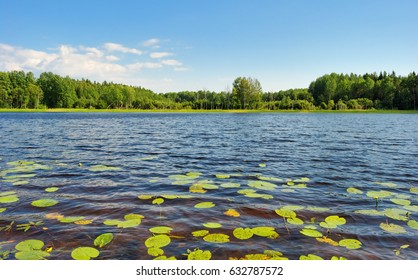 water lilies on the lake surface