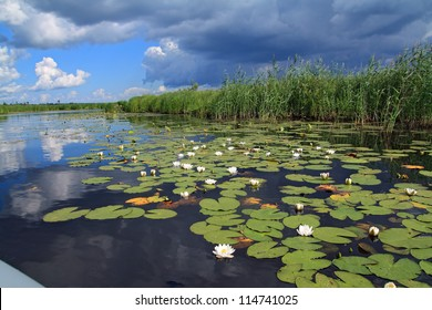 water lilies on small lake