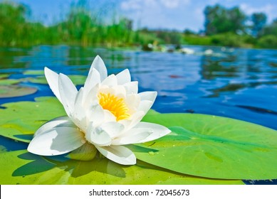 water lily floating on a lake
