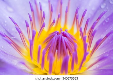 water lily flower (lotus) and leaf , selective focus . blur background